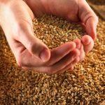 Полезные свойства зерна