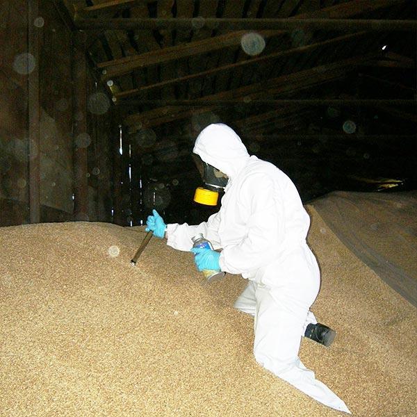 Обработка зерна от крыс